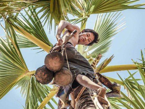 Kokosblütenzucker Indonesien