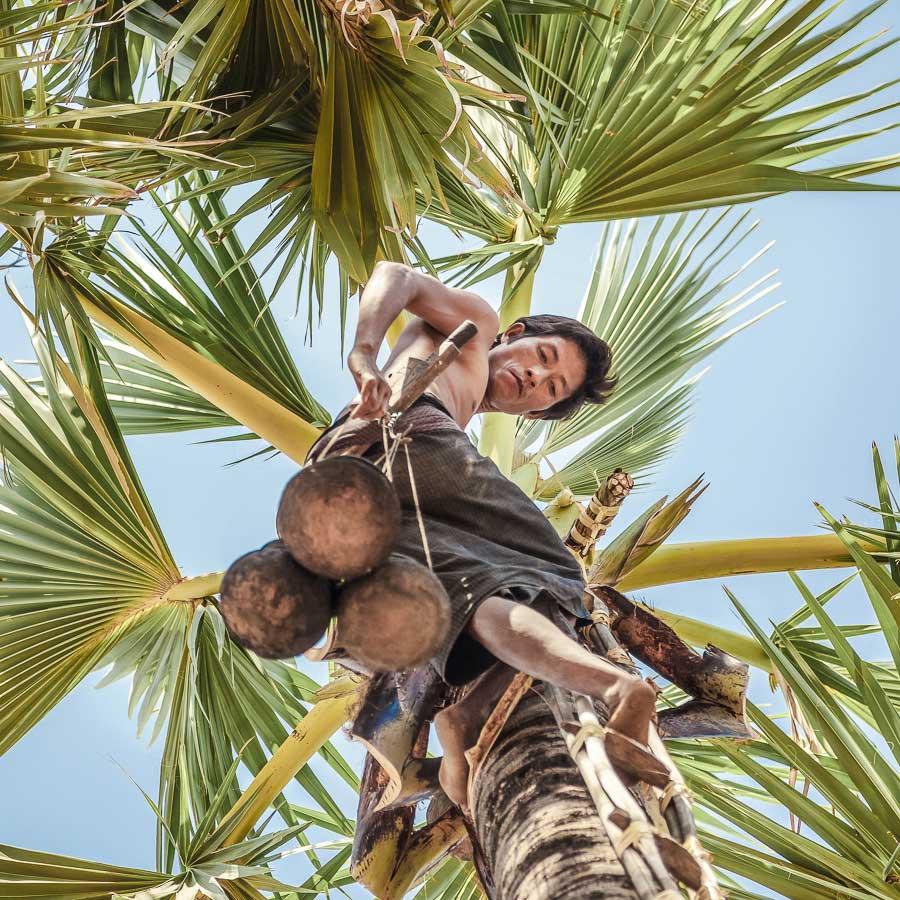 Kokosblütenzucker aus Indonesien